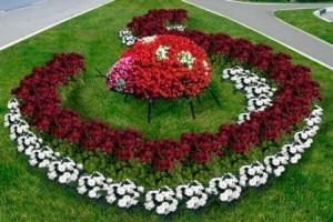 Если вы мечтаете посадить сад который