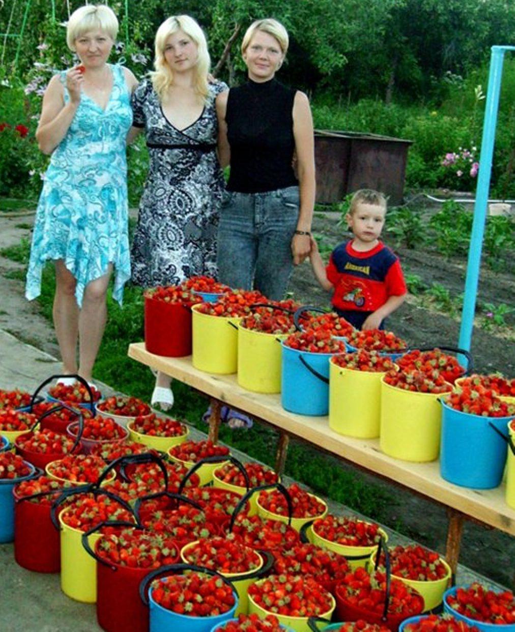 земляника,выращивание земляники,выращивание клубники +и земляники,+как выращивать землянику,