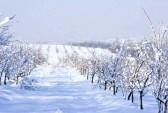 Сад зимой, плодовый сад