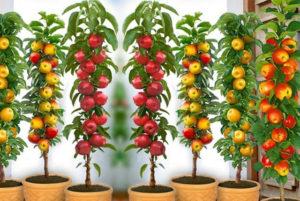 как посадить садовые культуры